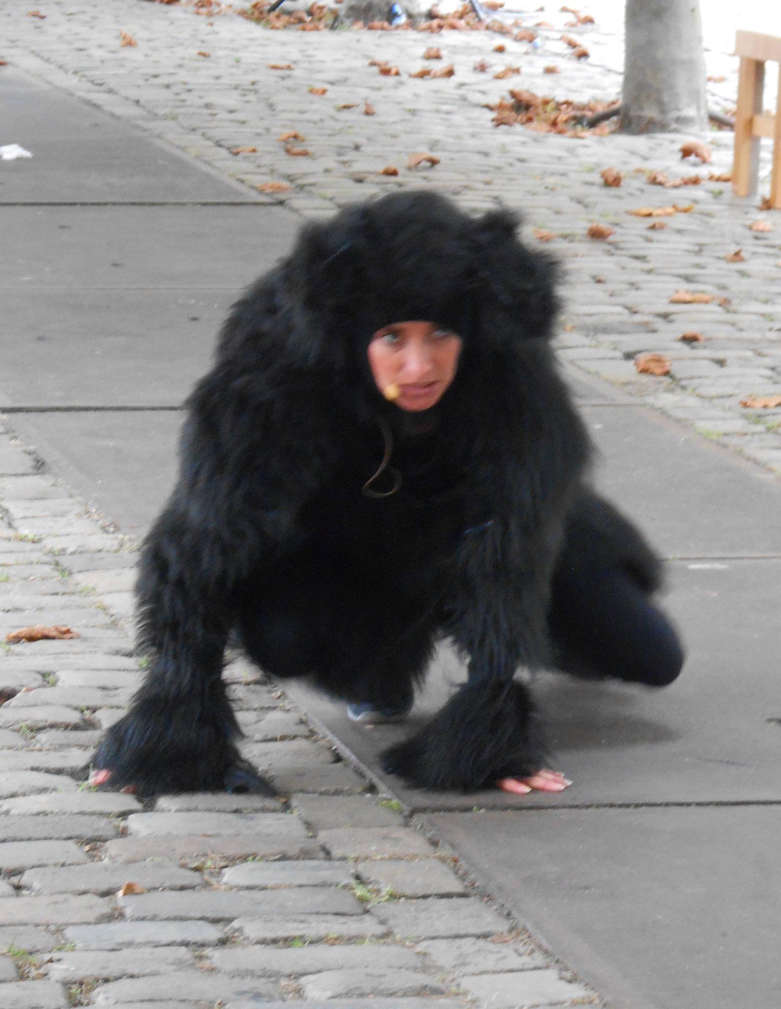 De Hond van Oost